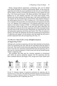 Hair Cell Regeneration, Repair, and Protection - Produktdetailbild 8