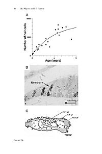 Hair Cell Regeneration, Repair, and Protection - Produktdetailbild 5