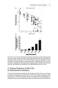 Hair Cell Regeneration, Repair, and Protection - Produktdetailbild 3