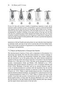 Hair Cell Regeneration, Repair, and Protection - Produktdetailbild 9