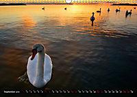 Halbinsel Mönchgut - Rügens schönste Seite (Wandkalender 2019 DIN A3 quer) - Produktdetailbild 9