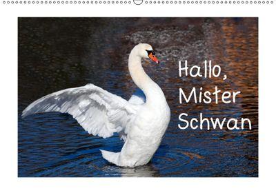 Hallo, Mister Schwan (Wandkalender 2019 DIN A2 quer), Christa Kramer