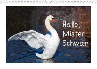 Hallo, Mister Schwan (Wandkalender 2019 DIN A4 quer), Christa Kramer