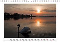 Hallo, Mister Schwan (Wandkalender 2019 DIN A4 quer) - Produktdetailbild 12