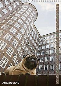 Hamburg - a pug city (Wall Calendar 2019 DIN A3 Portrait) - Produktdetailbild 1