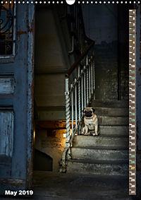 Hamburg - a pug city (Wall Calendar 2019 DIN A3 Portrait) - Produktdetailbild 5