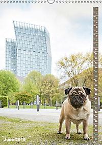 Hamburg - a pug city (Wall Calendar 2019 DIN A3 Portrait) - Produktdetailbild 6
