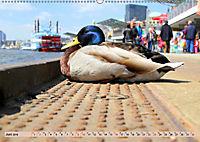 Hamburg - Unvergessliche Impressionen (Wandkalender 2019 DIN A2 quer) - Produktdetailbild 6