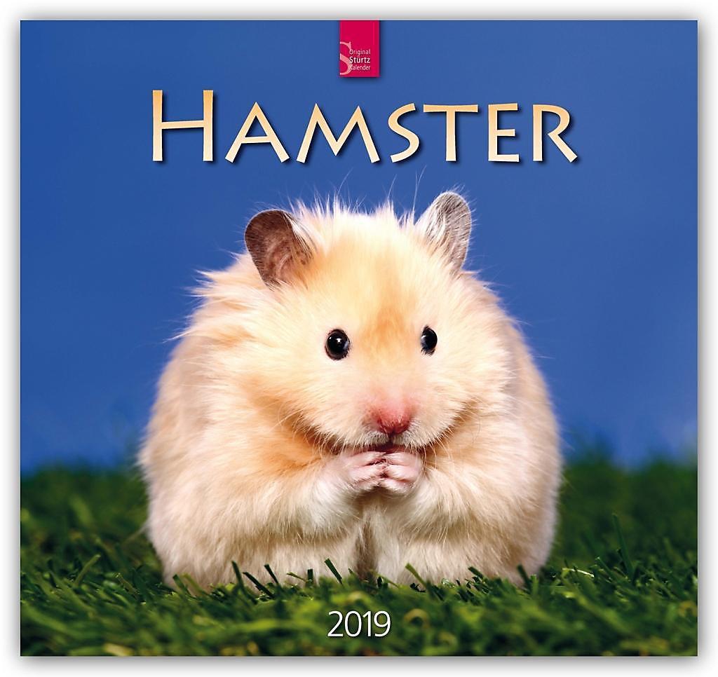 hamster 2019 kalender jetzt g nstig bei. Black Bedroom Furniture Sets. Home Design Ideas