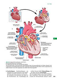 Handbuch Anatomie - Produktdetailbild 5