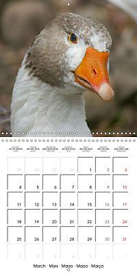 Happy Farm Animals (Wall Calendar 2019 300 × 300 mm Square) - Produktdetailbild 3