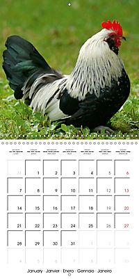 Happy Farm Animals (Wall Calendar 2019 300 × 300 mm Square) - Produktdetailbild 1