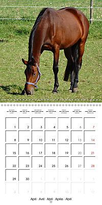 Happy Farm Animals (Wall Calendar 2019 300 × 300 mm Square) - Produktdetailbild 4
