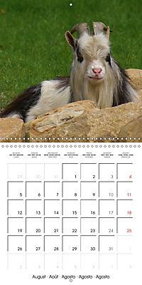 Happy Farm Animals (Wall Calendar 2019 300 × 300 mm Square) - Produktdetailbild 8