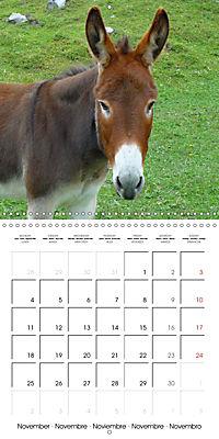 Happy Farm Animals (Wall Calendar 2019 300 × 300 mm Square) - Produktdetailbild 11