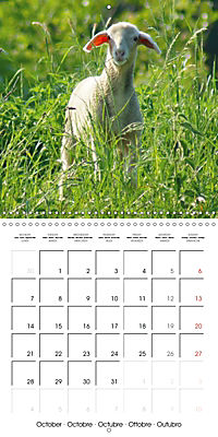 Happy Farm Animals (Wall Calendar 2019 300 × 300 mm Square) - Produktdetailbild 10