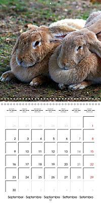 Happy Farm Animals (Wall Calendar 2019 300 × 300 mm Square) - Produktdetailbild 9