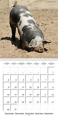Happy Farm Animals (Wall Calendar 2019 300 × 300 mm Square) - Produktdetailbild 12
