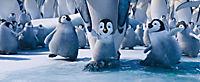 Happy Feet 2 - Produktdetailbild 3
