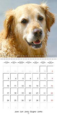 Happy Golden Retriever (Wall Calendar 2019 300 × 300 mm Square) - Produktdetailbild 6