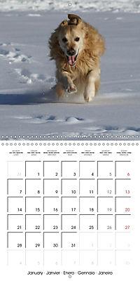 Happy Golden Retriever (Wall Calendar 2019 300 × 300 mm Square) - Produktdetailbild 1