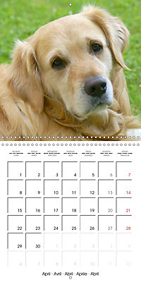 Happy Golden Retriever (Wall Calendar 2019 300 × 300 mm Square) - Produktdetailbild 4