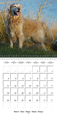 Happy Golden Retriever (Wall Calendar 2019 300 × 300 mm Square) - Produktdetailbild 3