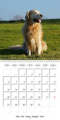 Happy Golden Retriever (Wall Calendar 2019 300 × 300 mm Square) - Produktdetailbild 5