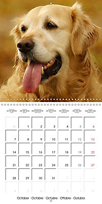 Happy Golden Retriever (Wall Calendar 2019 300 × 300 mm Square) - Produktdetailbild 10