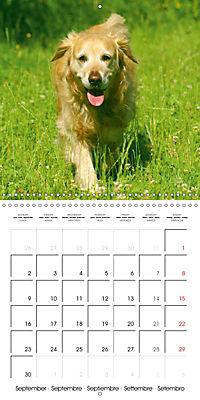 Happy Golden Retriever (Wall Calendar 2019 300 × 300 mm Square) - Produktdetailbild 9