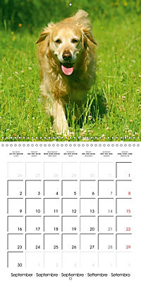 Happy Golden Retriever (Wall Calendar 2019 300 × 300 mm Square) - Produktdetailbild 9