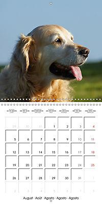 Happy Golden Retriever (Wall Calendar 2019 300 × 300 mm Square) - Produktdetailbild 8
