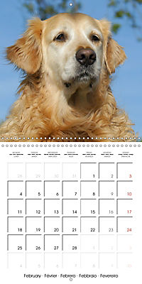 Happy Golden Retriever (Wall Calendar 2019 300 × 300 mm Square) - Produktdetailbild 2