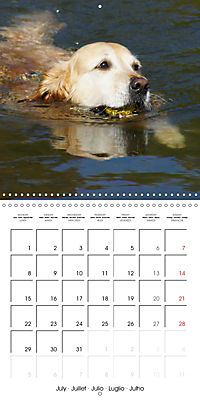 Happy Golden Retriever (Wall Calendar 2019 300 × 300 mm Square) - Produktdetailbild 7