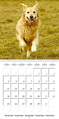 Happy Golden Retriever (Wall Calendar 2019 300 × 300 mm Square) - Produktdetailbild 11