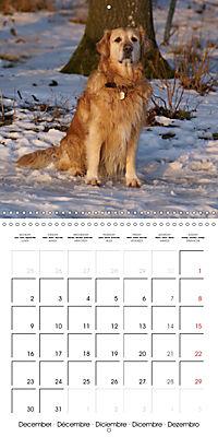 Happy Golden Retriever (Wall Calendar 2019 300 × 300 mm Square) - Produktdetailbild 12