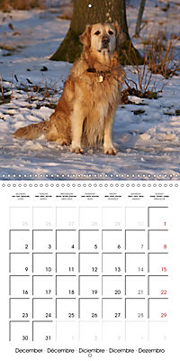 Happy Golden Retriever (Wall Calendar 2019 300 × 300 mm Square) - Produktdetailbild 12