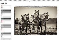 Harvest, pictures from yesteryear (Wall Calendar 2019 DIN A3 Landscape) - Produktdetailbild 6