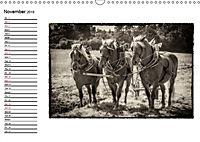 Harvest, pictures from yesteryear (Wall Calendar 2019 DIN A3 Landscape) - Produktdetailbild 11
