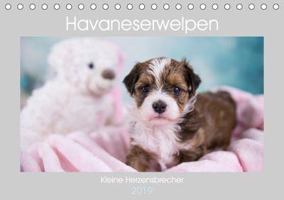 Havaneserwelpen - Kleine Herzensbrecher (Tischkalender 2019 DIN A5 quer), Nicole Tauschnik