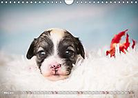 Havaneserwelpen - Kleine Herzensbrecher (Wandkalender 2019 DIN A4 quer) - Produktdetailbild 3