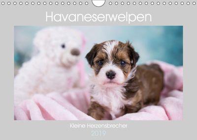 Havaneserwelpen - Kleine Herzensbrecher (Wandkalender 2019 DIN A4 quer), Nicole Tauschnik