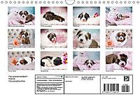 Havaneserwelpen - Kleine Herzensbrecher (Wandkalender 2019 DIN A4 quer) - Produktdetailbild 13