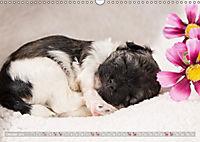 Havaneserwelpen - Kleine Herzensbrecher (Wandkalender 2019 DIN A3 quer) - Produktdetailbild 10