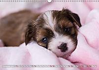 Havaneserwelpen - Kleine Herzensbrecher (Wandkalender 2019 DIN A3 quer) - Produktdetailbild 12