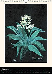 Heilkräuter in Pastell (Wandkalender 2019 DIN A4 hoch) - Produktdetailbild 1