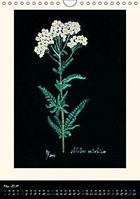 Heilkräuter in Pastell (Wandkalender 2019 DIN A4 hoch) - Produktdetailbild 5