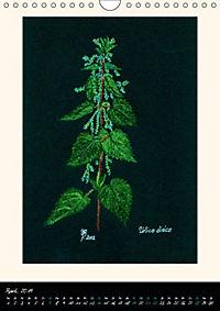 Heilkräuter in Pastell (Wandkalender 2019 DIN A4 hoch) - Produktdetailbild 4
