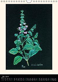 Heilkräuter in Pastell (Wandkalender 2019 DIN A4 hoch) - Produktdetailbild 7