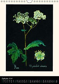 Heilkräuter in Pastell (Wandkalender 2019 DIN A4 hoch) - Produktdetailbild 9
